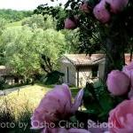 Osho-circle-school cottages rose