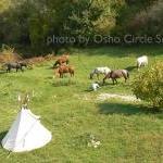 Osho-circle-school lands 34